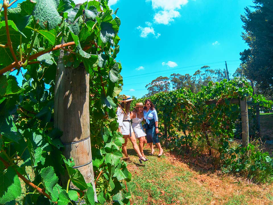 Hens-Winery-Tours-Yarra-Valley